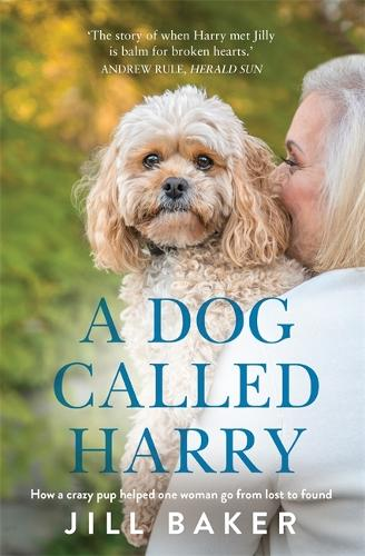 A Dog Called Harry (Paperback)