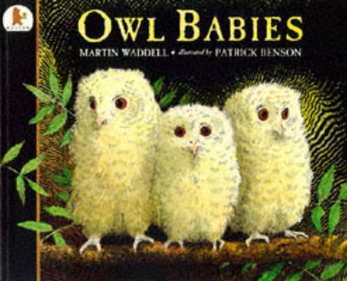 Owl Babies (Paperback)