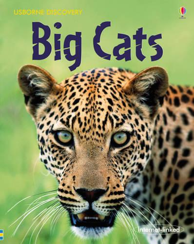 Big Cats - Discovery (Hardback)