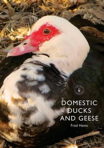 Domestic Ducks and Geese - Shire Album S. 378 (Paperback)