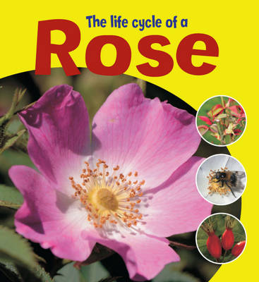 The Life Cycle of a Rose - Learning About Life Cycles 7 (Hardback)
