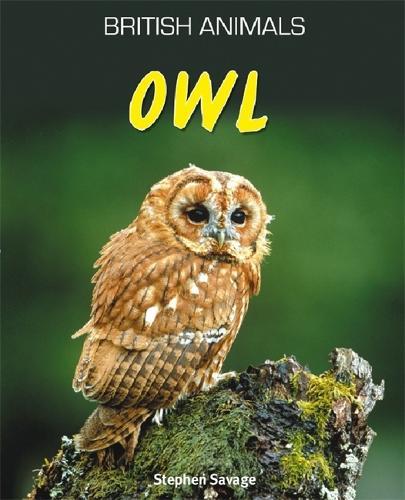 British Animals: Owl - British Animals (Paperback)