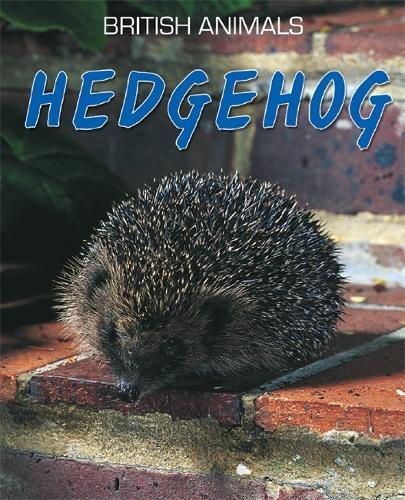 British Animals: Hedgehog - British Animals (Paperback)