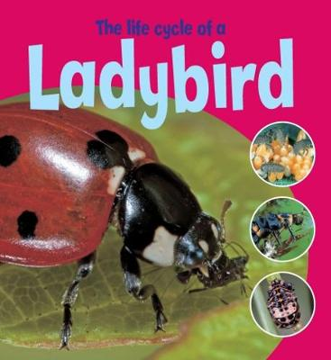 Learning About Life Cycles: The Life Cycle of a Ladybird - Learning About Life Cycles (Paperback)