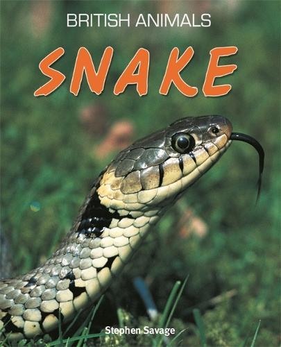 British Animals: Snake - British Animals (Paperback)