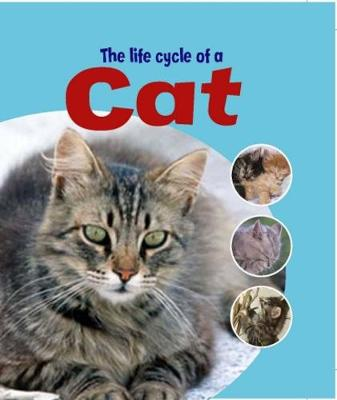 Learning About Life Cycles: The Life Cycle of A Cat - Learning About Life Cycles (Paperback)
