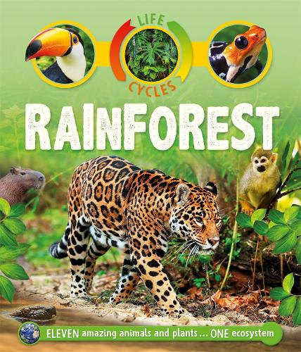 Life Cycles: Rainforest - Life Cycles (Paperback)