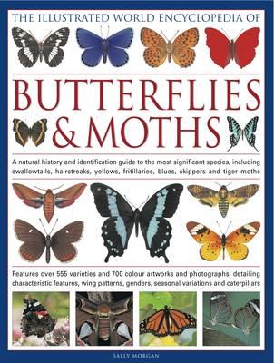 Illustrated World Encyclopedia of Butterflies & Moths (Hardback)