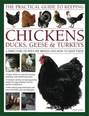 Practical Guide to Keeping Chickens, Duck, Geese & Turkeys (Hardback)