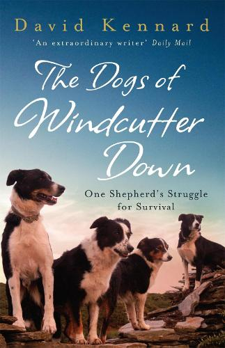 The Dogs of Windcutter Down (Paperback)