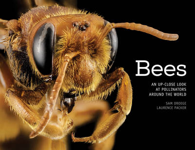 Bees: An Up-Close Look at Pollinators Around the World (Hardback)