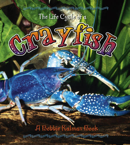 The Life Cycle of a Crayfish (Hardback)