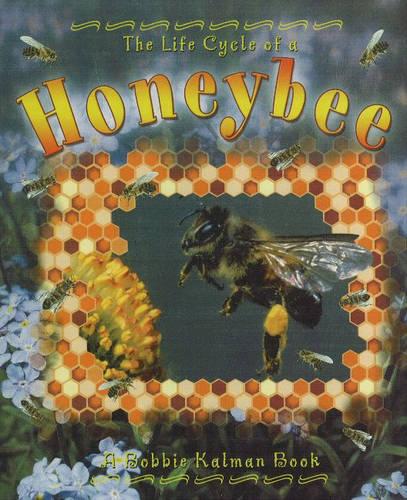 The Life Cycle of a Honeybee - Life Cycle (Hardback)