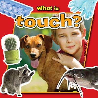 What is Touch? - Senses Close-Up (Paperback)