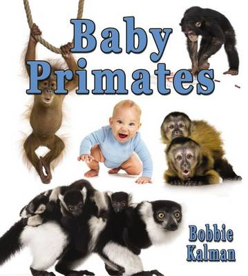 Baby Primates - It's Fun to Learn About Baby Animals (Paperback)