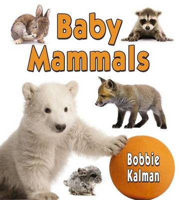 Baby Mammals - It's Fun to Learn About Baby Animals (Paperback)
