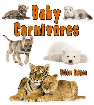 Baby Carnivores - Its fun to learn about baby animals (Paperback)