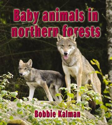 Baby Animals in Northern Forests - Habitats of Baby Animals (Paperback)