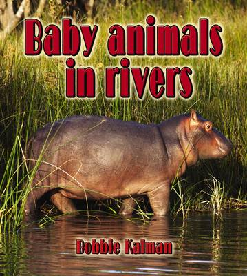 Baby Animals in Rivers - Habitats of Baby Animals (Paperback)