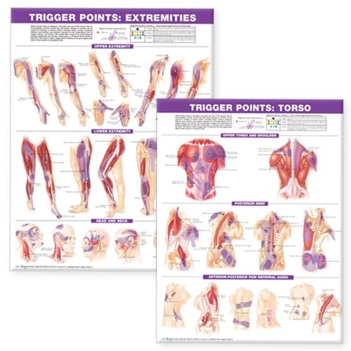 Trigger Point Chart Set: Torso & Extremities Paper (Wallchart)