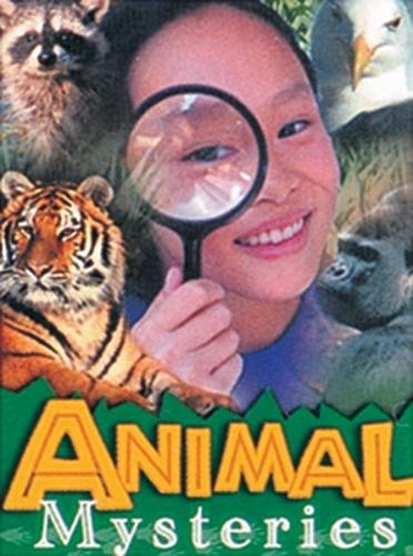 Animal Mysteries - Wildcats (Paperback)