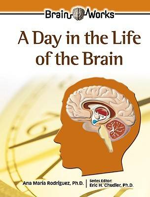A Day in the Life of the Brain - Gray Matter for Juniors (Hardback)