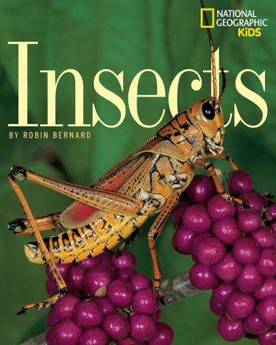 Insects (Paperback)
