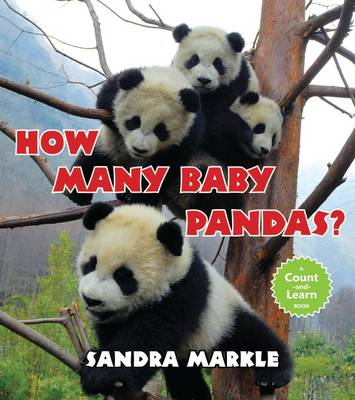 How Many Baby Pandas? (Paperback)
