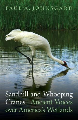 Sandhill and Whooping Cranes: Ancient Voices over America's Wetlands (Paperback)
