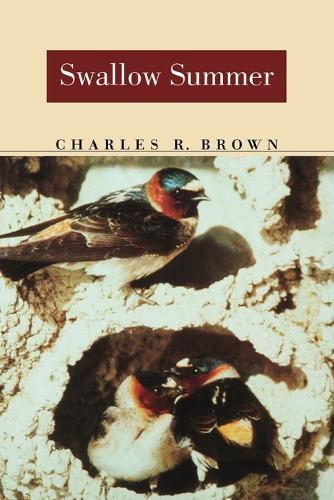 Swallow Summer (Paperback)