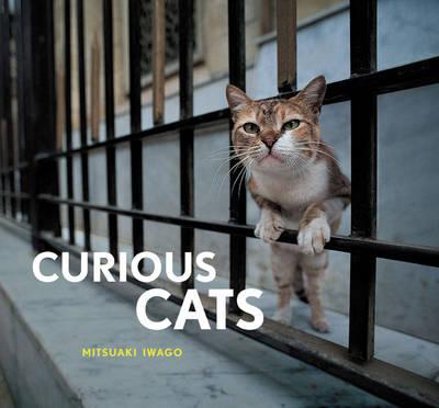 Curious Cats (Hardback)