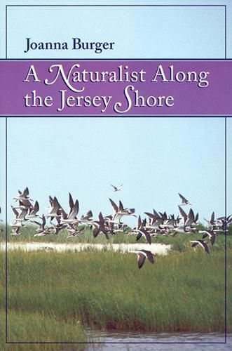 A Naturalist along the Jersey Shore (Paperback)