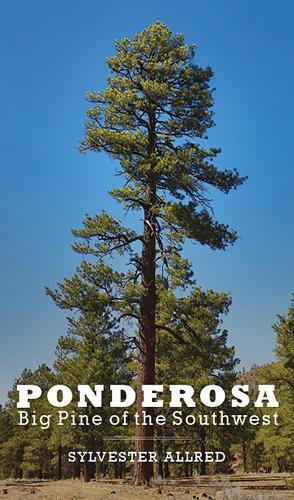 Ponderosa: Big Pine of the Southwest (Paperback)