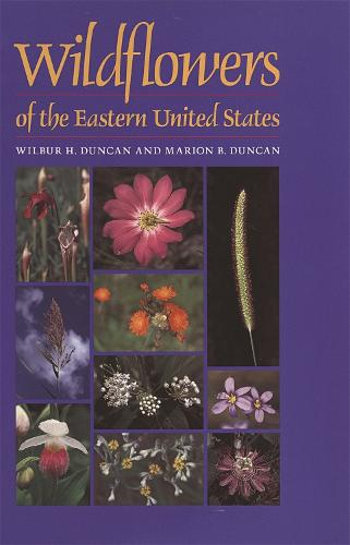 Wildflowers of the Eastern United States (Paperback)