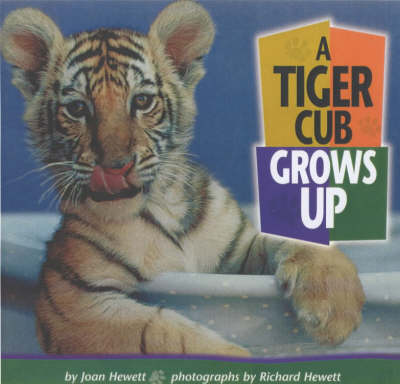 A Tiger Cub Grows Up (Paperback)