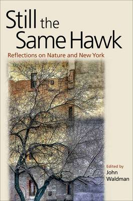 Still the Same Hawk: Reflections on Nature and New York (Paperback)