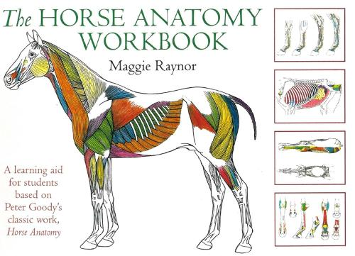The Horse Anatomy Workbook by Maggie Raynor | Waterstones