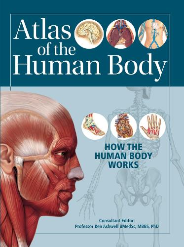 Atlas of the Human Body: How the Human Body Works (Paperback)