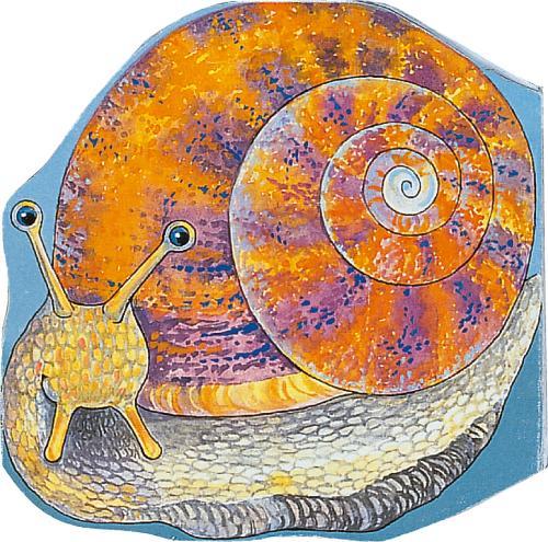 Pocket Snail - Pocket Pals (Board book)