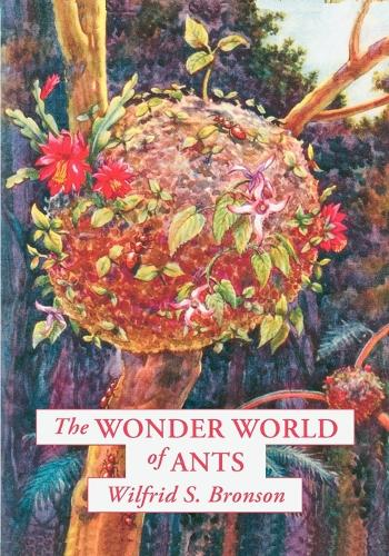 The Wonder World of Ants (Paperback)