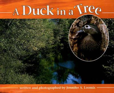 Duck in a Tree (Hardback)