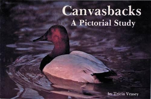 Canvasbacks: A Pictorial Study (Paperback)