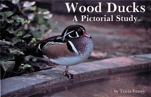 Wood Ducks: A Pictorial Study (Paperback)