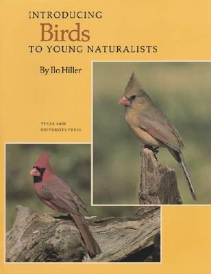 Introducing Birds (Paperback)
