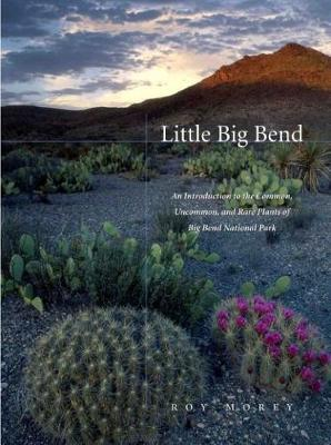 Little Big Bend: Common, Uncommon, and Rare Plants of Big Bend National Park - Grover E. Murray Studies in the American Southwest (Paperback)