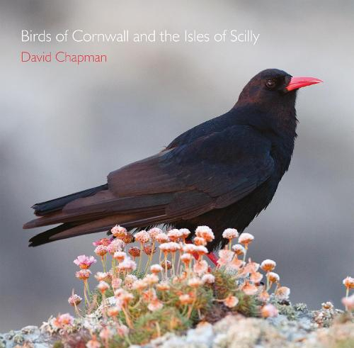 Birds of Cornwall and the Isles of Scilly - Pocket Cornwall (Paperback)