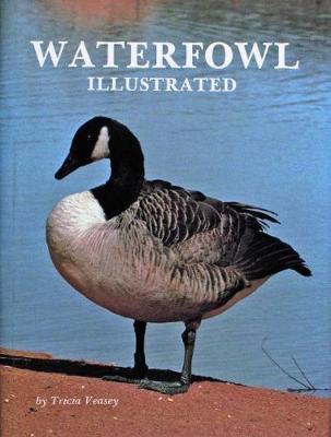 Waterfowl Illustrated (Hardback)