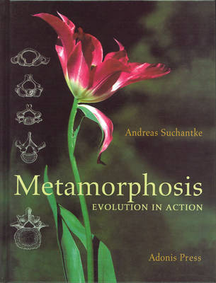 Metamorphosis: Evolution in Action (Hardback)
