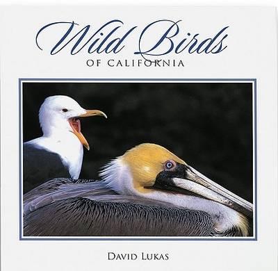 Wild Birds of California (Paperback)