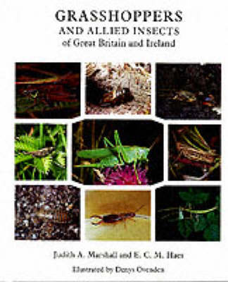 Grasshoppers and Allied Insects of Great Britain and Ireland (Paperback)